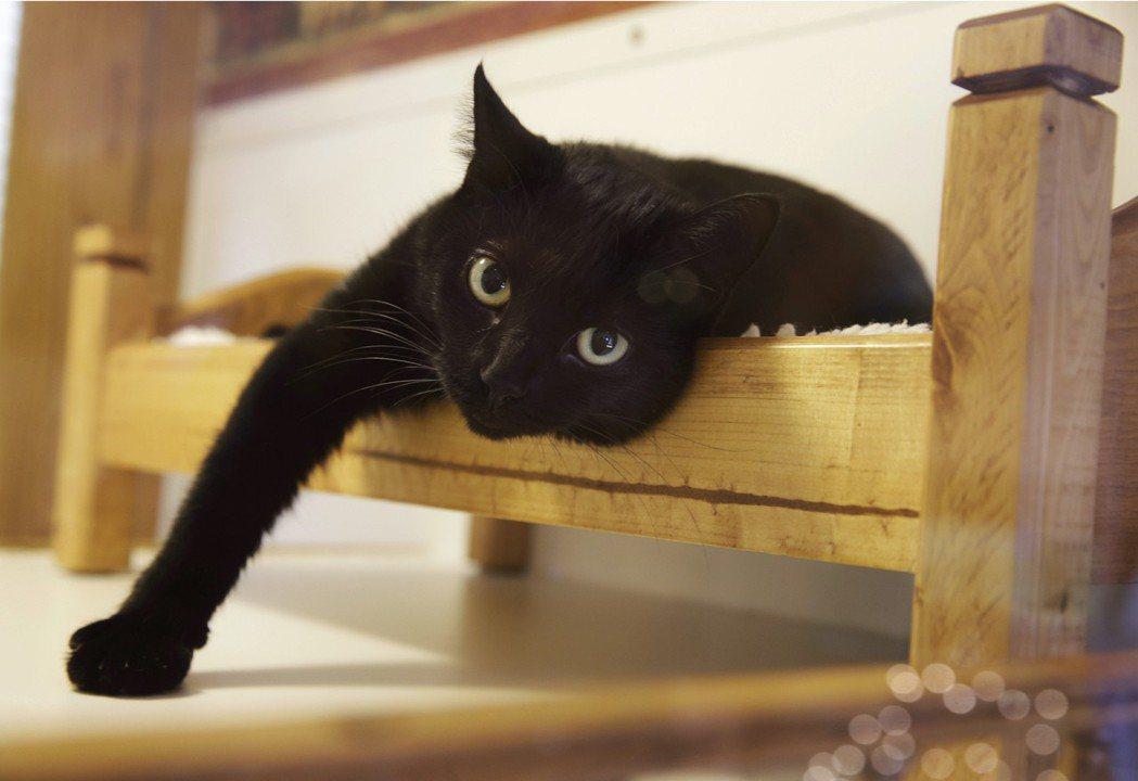示意圖,非本文所指之黑貓。 圖/美聯社