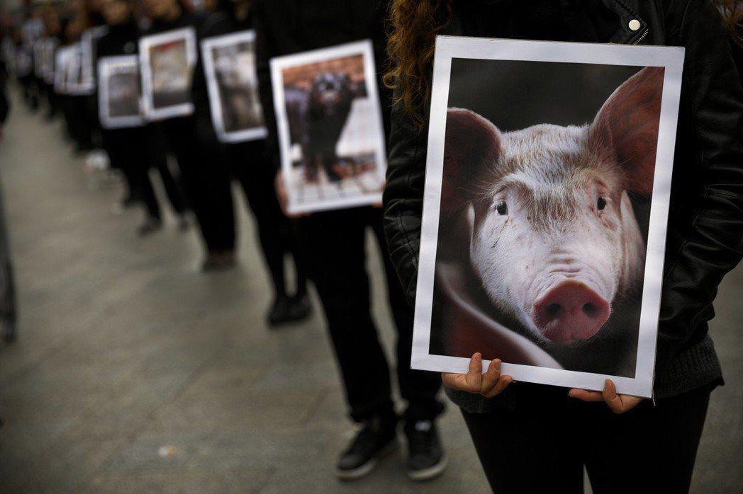 在同伴動物虐待事件發生時,指出「經濟動物更慘」,顯然無助於動保的進步。 圖/美聯...