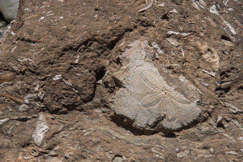 一條條長短不一的生痕化石足跡遍佈腳邊的岩石  攝影|行遍天下
