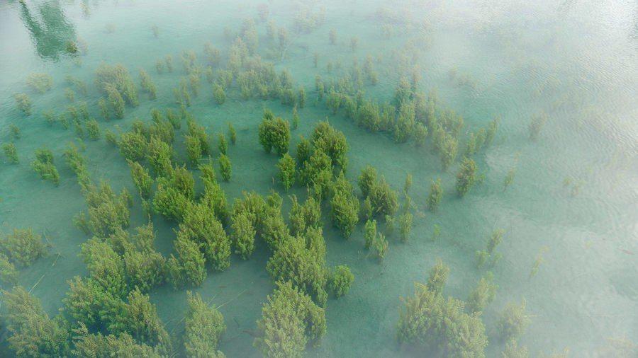圖說:英國科學家認為,對抗全球暖化,保存森林是最有效率的方法。(Photo by...
