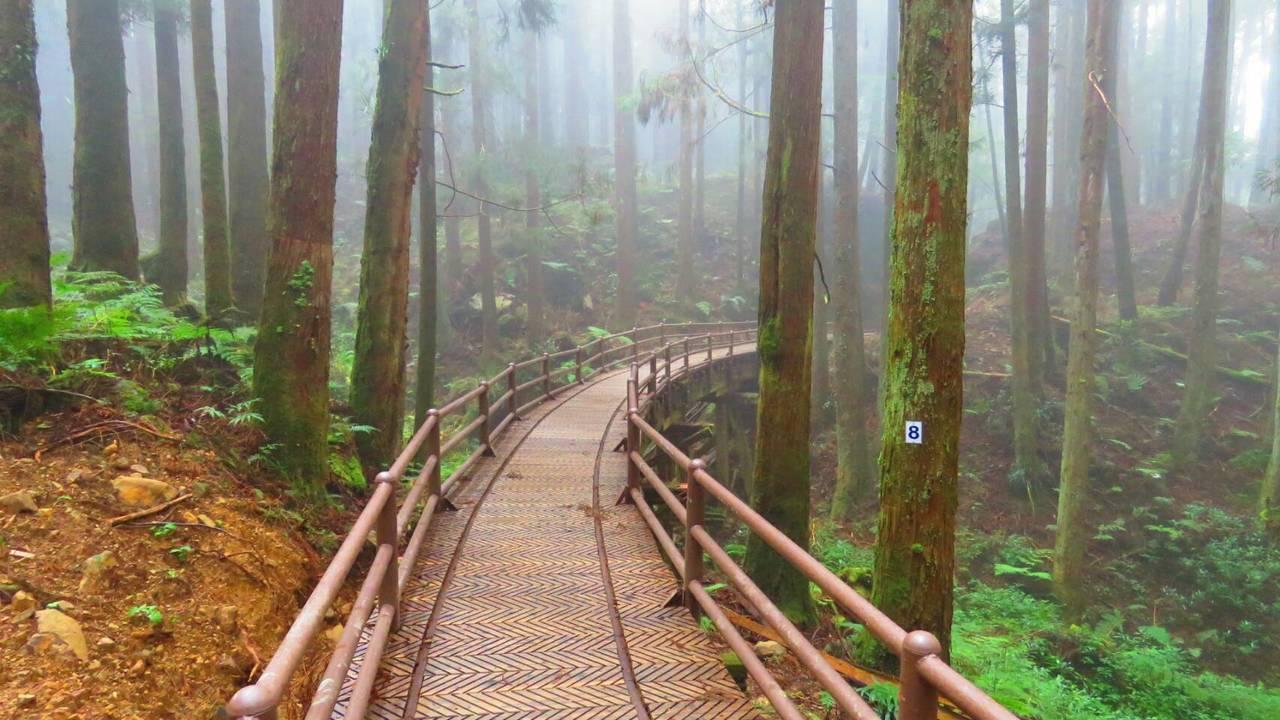 阿里山特富野古道沿途生態豐富,柳杉環繞滿山遍谷、蒼勁挺拔,沿路闊葉原始林濃綠相伴...