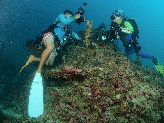 墾丁南灣獨立礁區1株海扇和棲息其間豆丁海馬,本月3日發現不翼而飛,之前是該海域的...