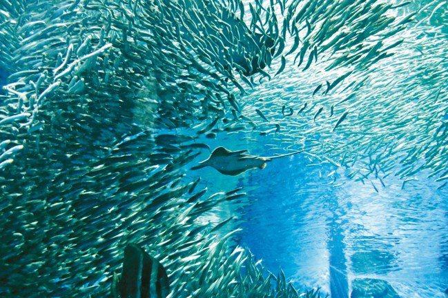 大洗町水族館擁有全日本最多的鯊魚種類,並有精采海豚秀演出。 圖/陳志光、游慧君