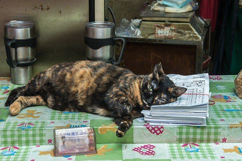 店長瞇一下 住市場的老貓「醜女」習慣人來人往,一臉淡定。  攝影 行遍天下