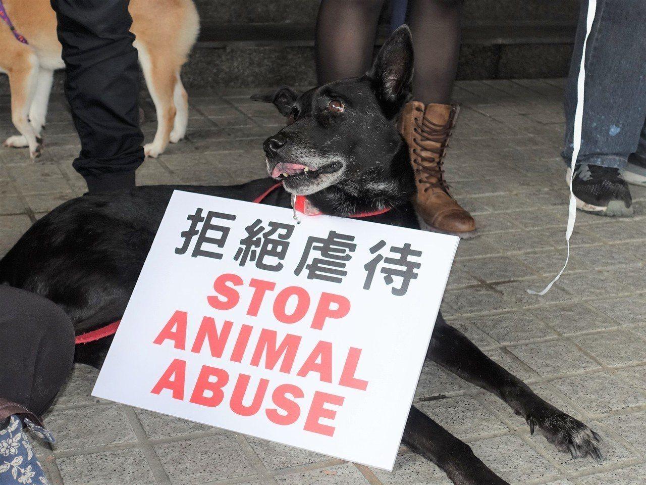 一群來自全台的愛狗人士,今天下午到屏東縣政府陳情,要求改善公園管理,不要再發生虐...