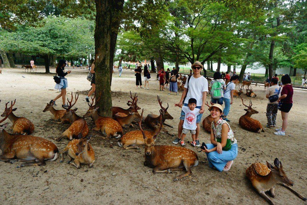 張家慧和老公帶兒子到奈良公園看鹿。圖/周子娛樂提供