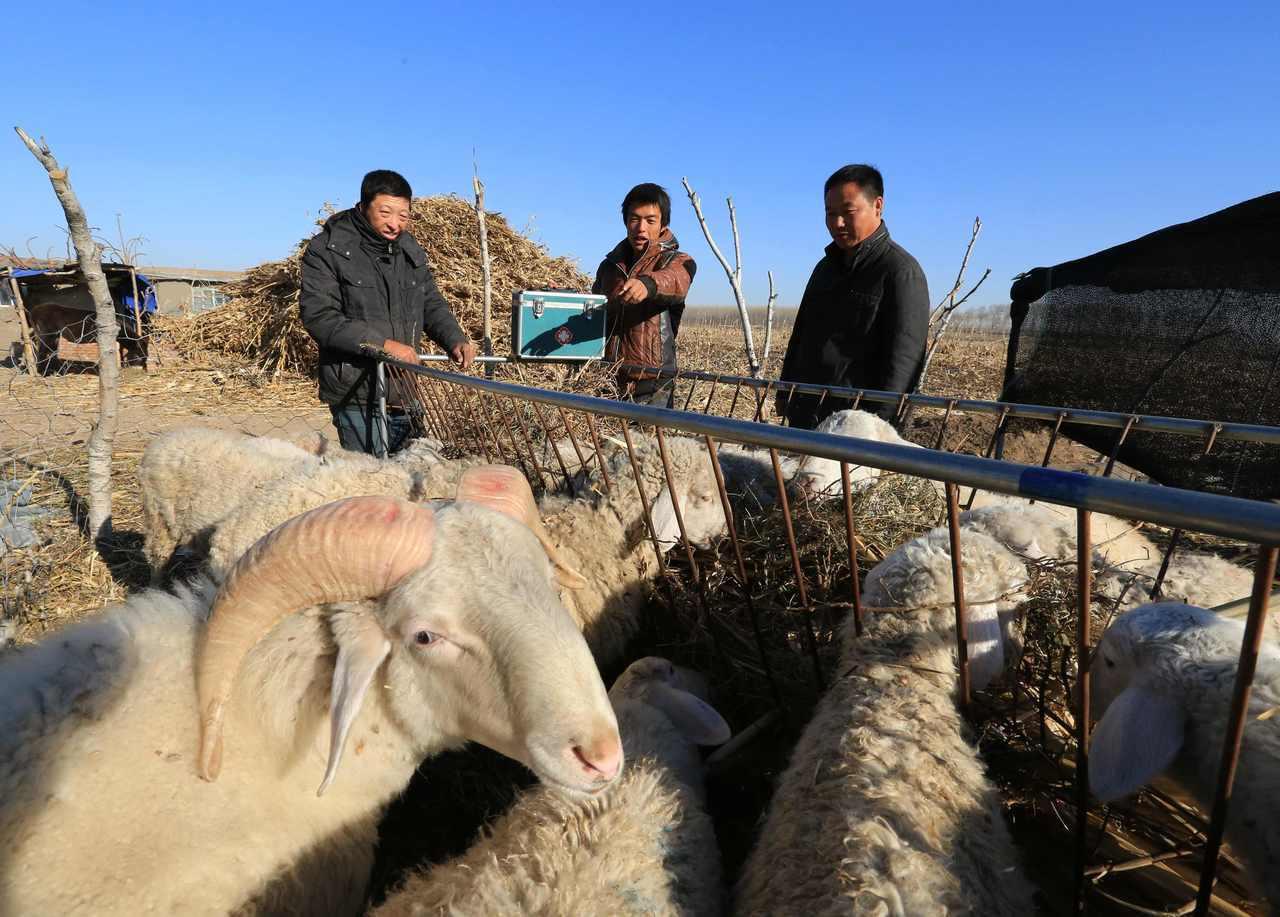 黑龍江14人染炭疽。新華社資料照