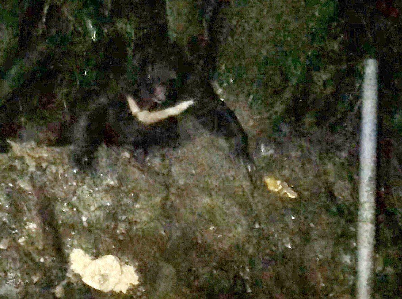 台東林管處表示,8月9日及10日晚間,連續兩天都在向陽山屋週邊發現台灣黑熊蹤影,...