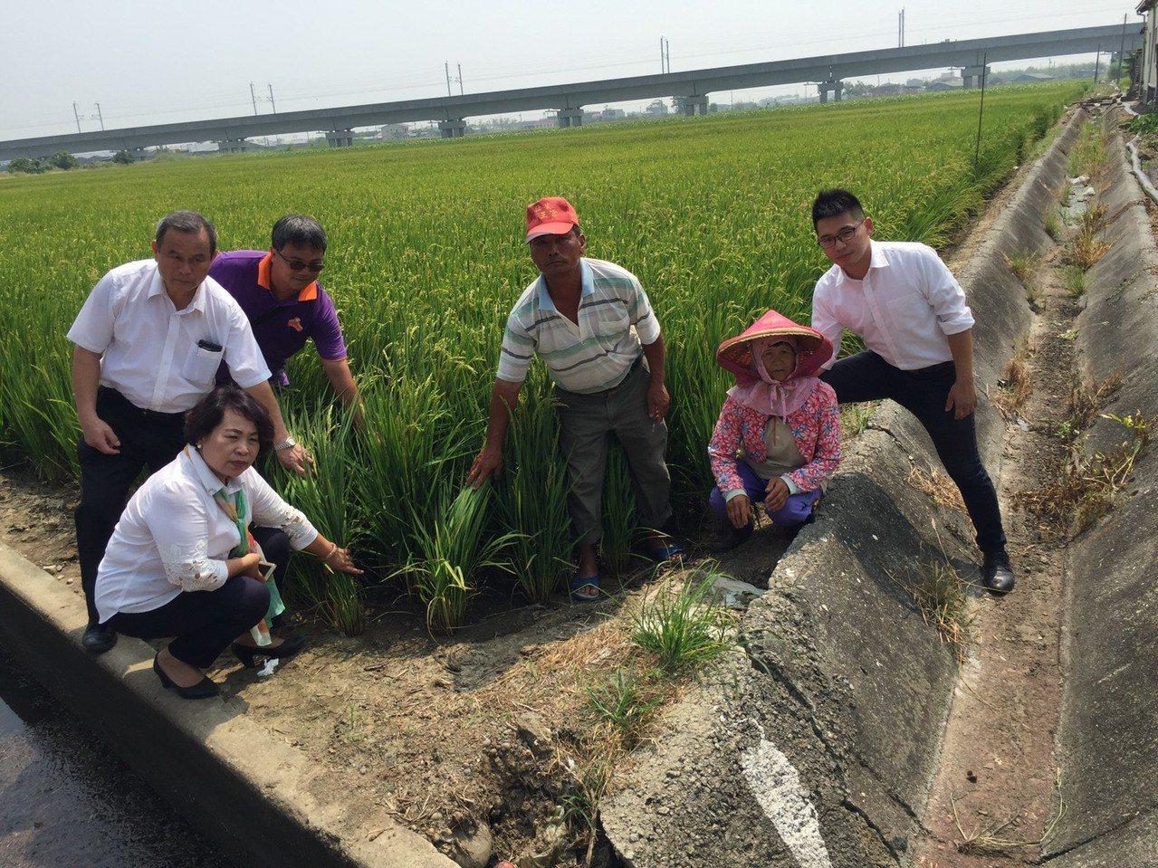 今年一期作曾發生缺水灌溉情形,農民心急如焚。 圖/吳政修資料照片