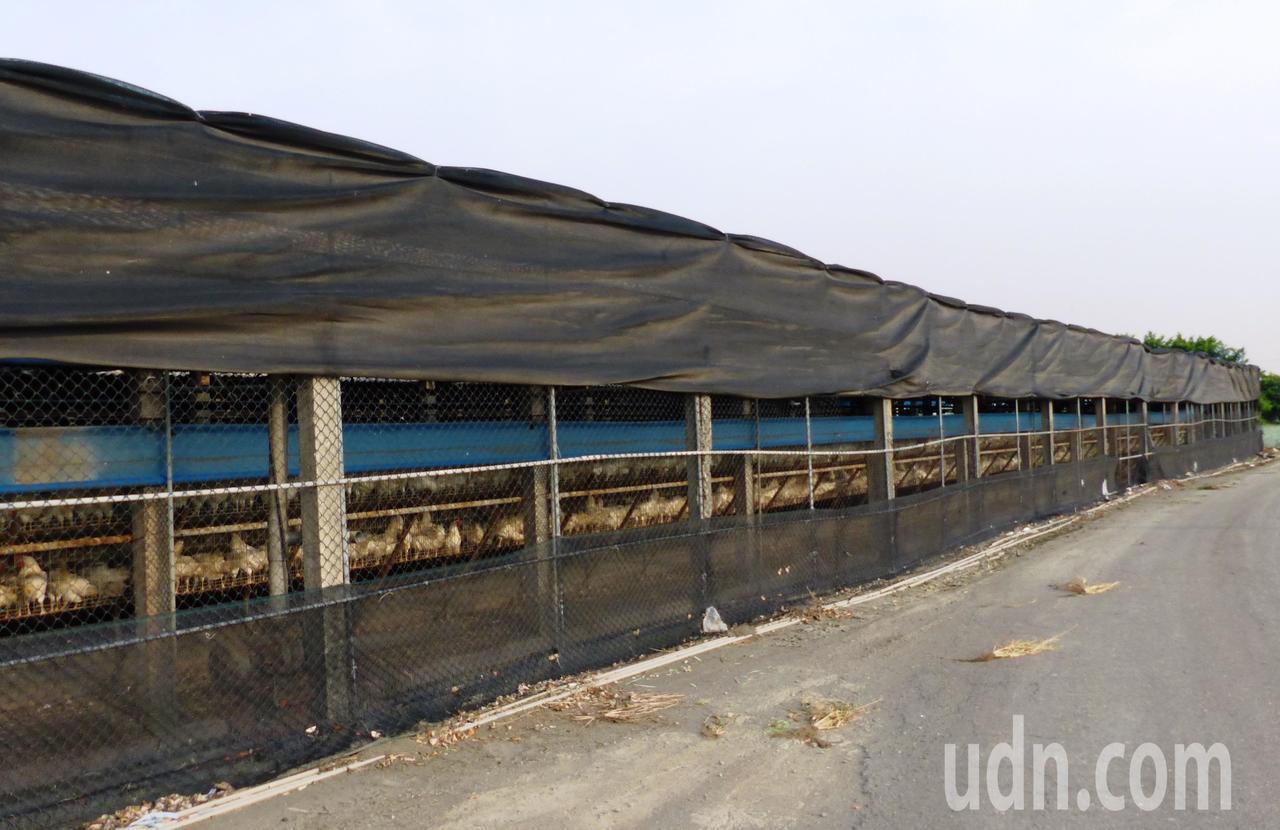 彰化縣芳苑鄉有許多養雞場,其中有次級蛋流向桃園元山蛋行。記者凌筠婷/攝影