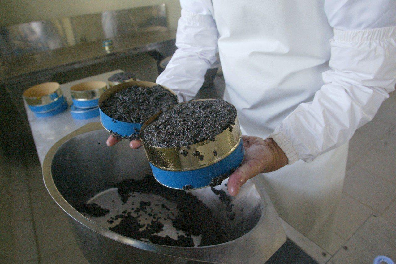 圖為白化鱘魚卵製成的頂級魚子醬,一公斤通常能賣到約台幣75萬元。法新社