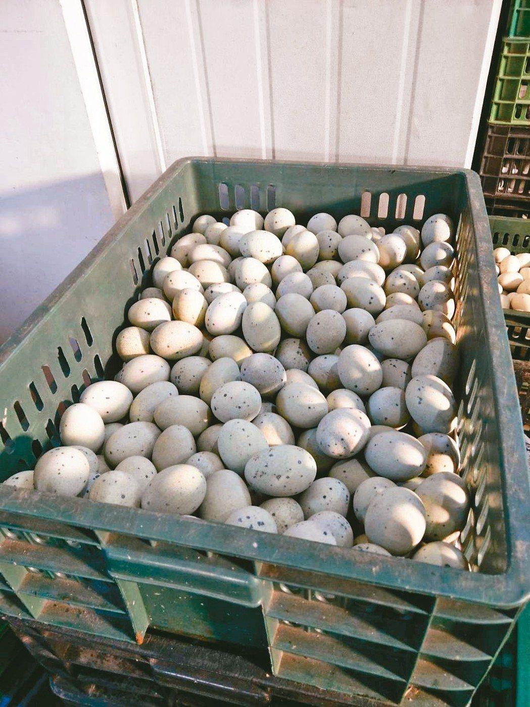 元山蛋商將發霉的雞蛋回收放在冰庫保存,待周末打成蛋液銷售。 記者曾健祐/翻攝