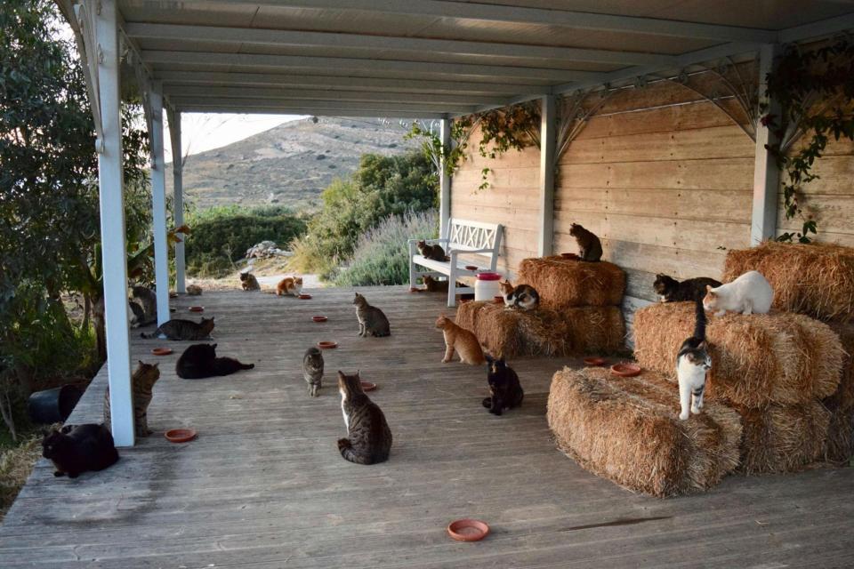 臉書一則夢幻工作廣告,吸引了上千位貓奴們的注意。 擷自太陽報