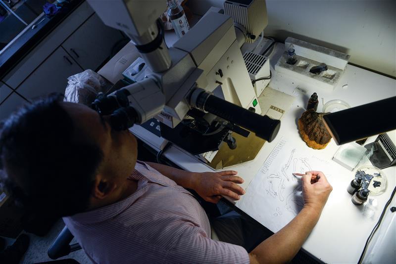 肉眼難以辨識的生物構造也需透過 顯微鏡觀察後再描繪出來。