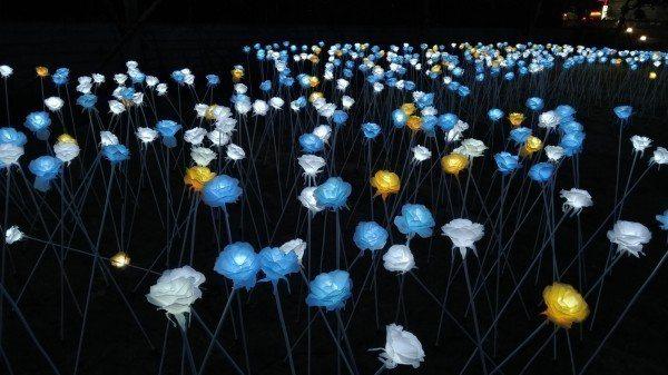 淡水海關碼頭重新開放,設置LED玫瑰花燈。圖/淡水古蹟博物館提供