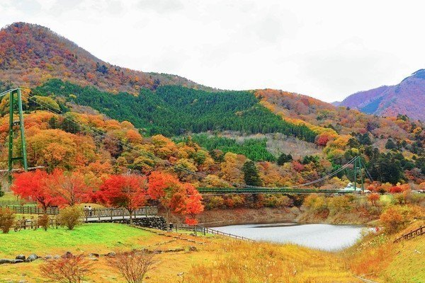 「紅葉谷大吊橋」周圍的塩原溪谷四季風景如畫,每逢秋季更有滿山遍野的紅葉。圖/樂天...