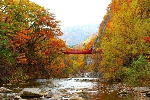 「二見吊橋」每逢秋季吊橋兩側將被漫山遍野的紅葉包圍。圖/樂天旅遊提供