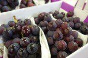 這4種水果容易堆積蟲卵 吃之前一定要洗乾淨!