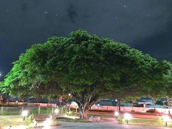 新光水資中心-老樹