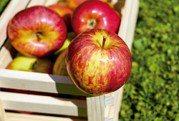 犯睏時吃蘋果比喝咖啡還能提神?營養師這麼解釋