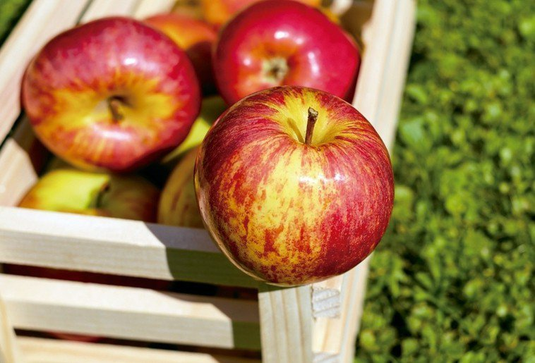 蘋果 圖/123RF