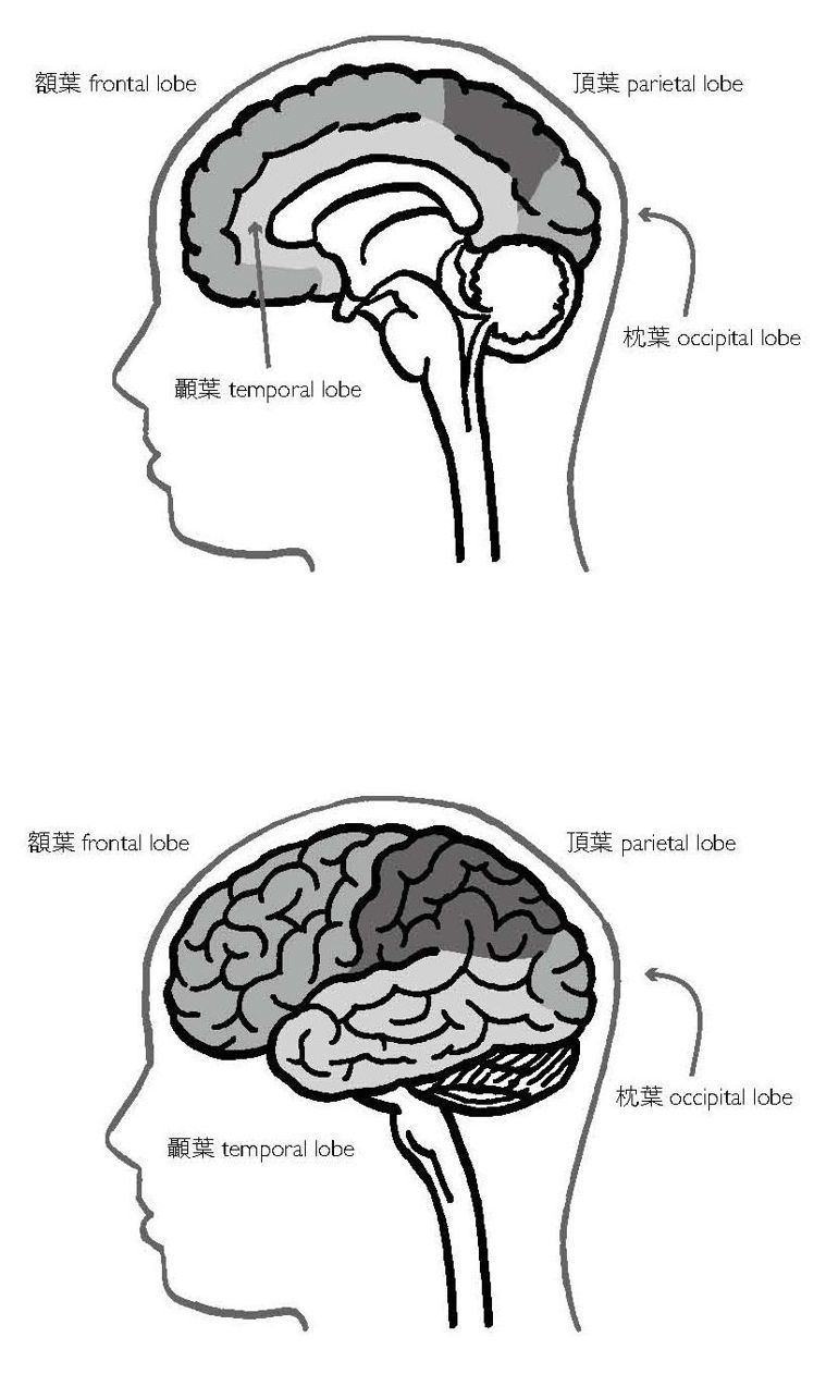 圖/選自臉譜《外科醫生與瘋狂大腦決鬥的傳奇》