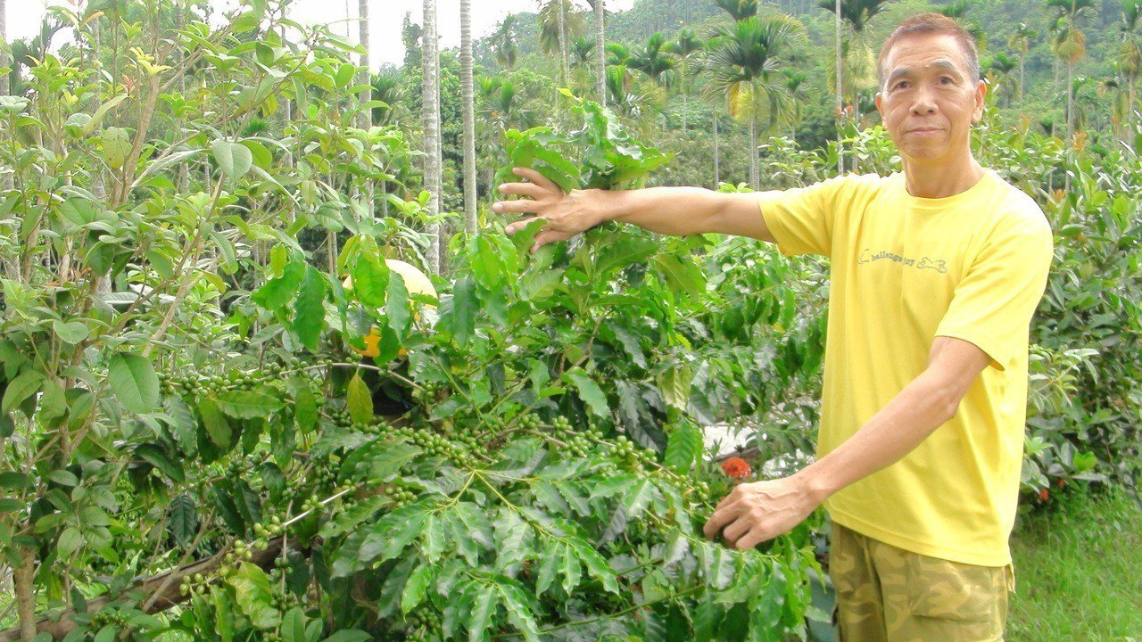 田定宏研究咖啡10多年,研發獨特且成功的栽種方法。記者謝恩得/攝影