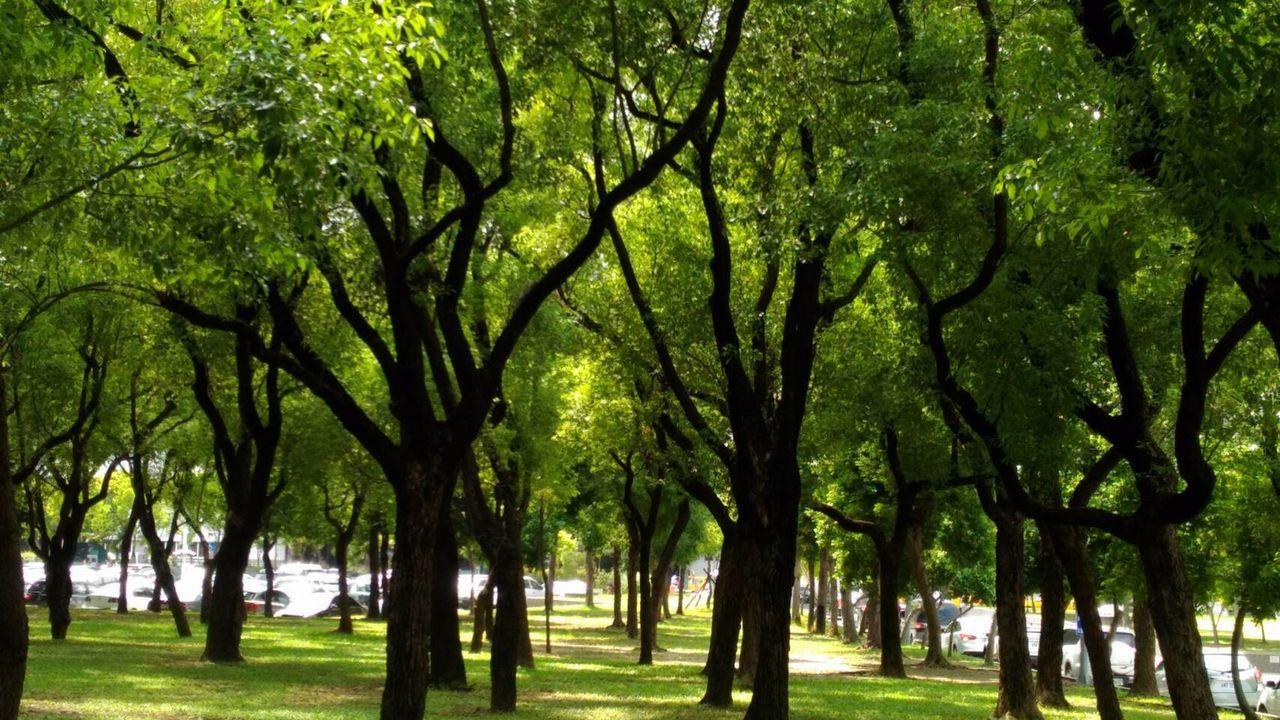 鍾情園藝的「換肝之父」陳肇隆,移植自家親自育成的苗木,把高雄長庚院區打造得綠意盎...