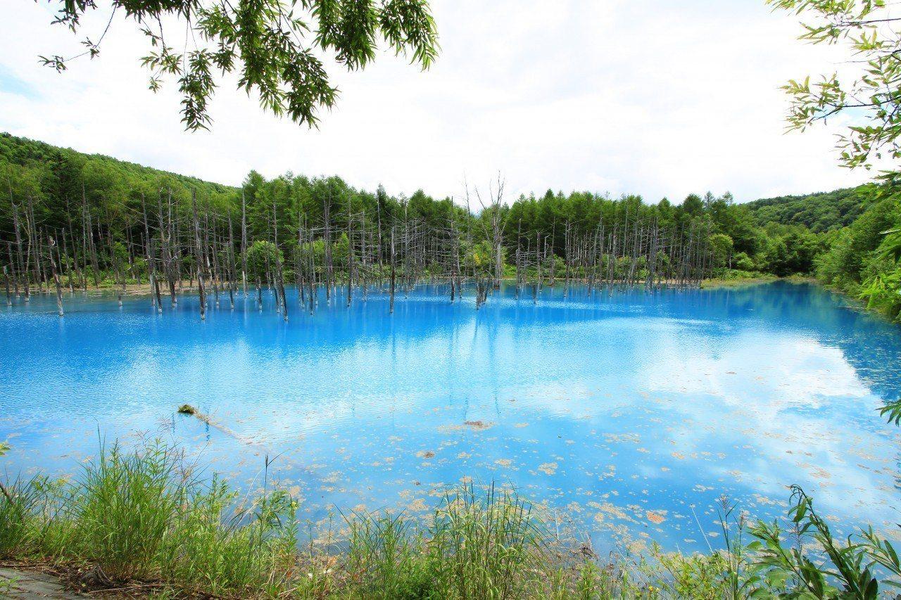▲日本打卡景點-北海道青池。(圖/©JTA/ ©JNTO)