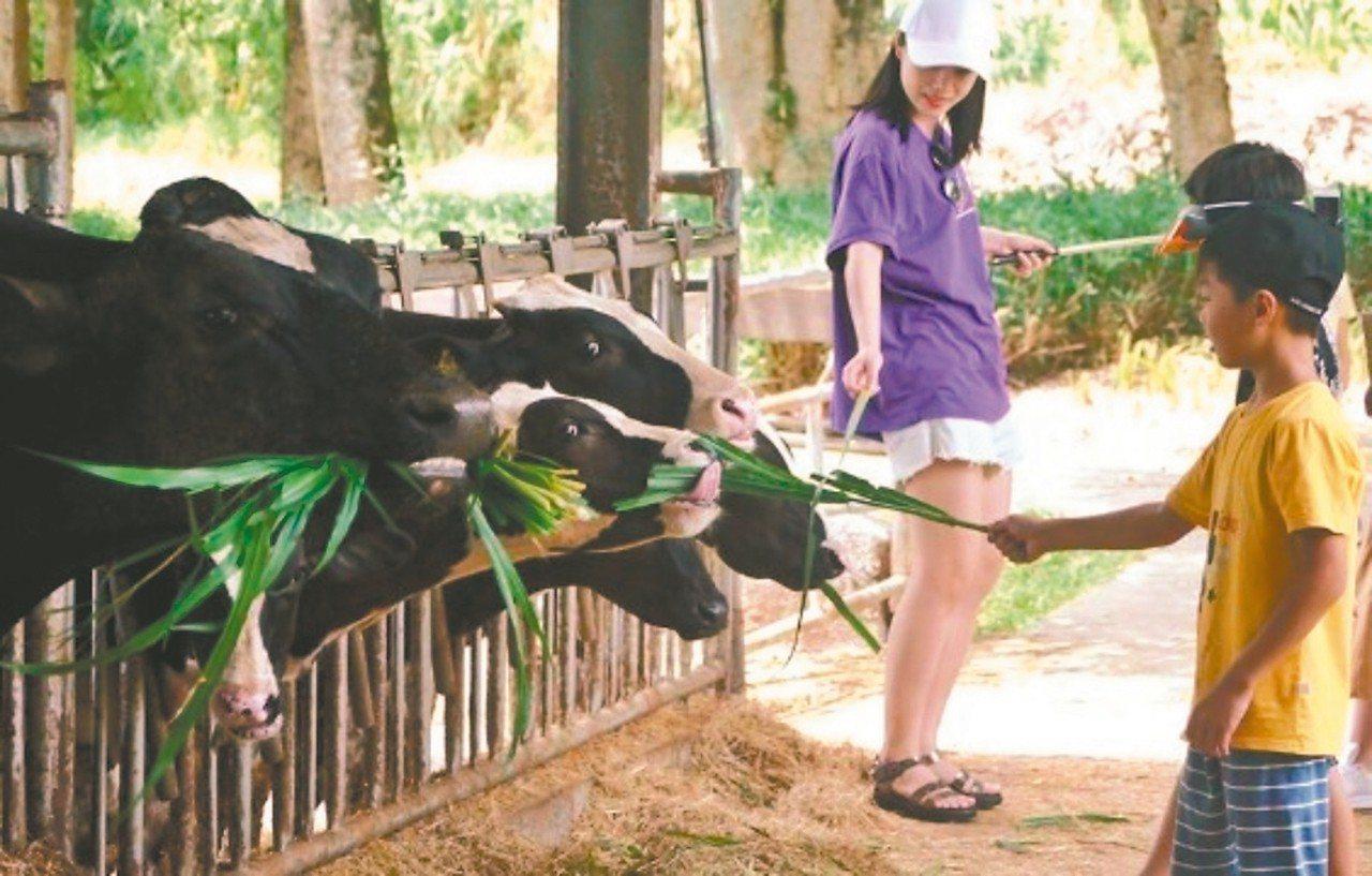 「來去縱谷住一晚!」遊客造訪瑞穗牧場,體驗餵牛吃草的樂趣。 圖/縱管處提供