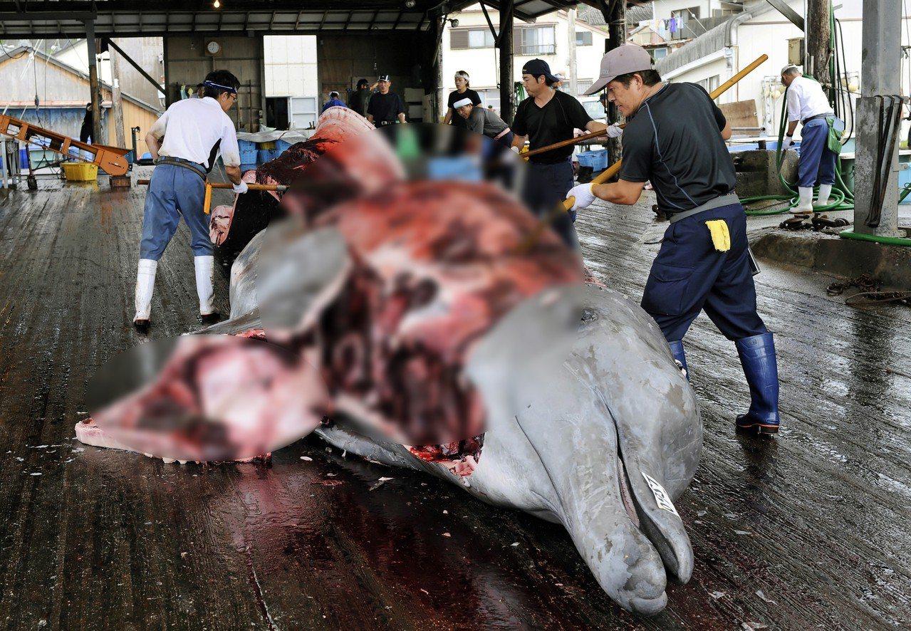 圖為2014年日本捕獵小鬚鯨的資料照。 歐新社
