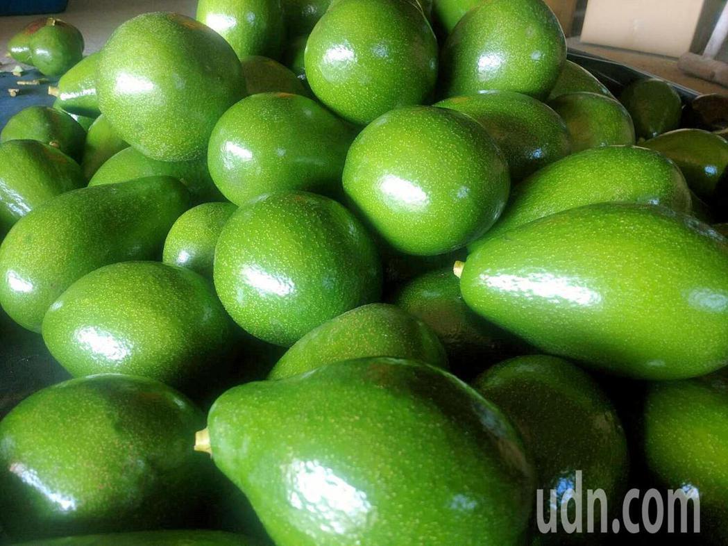 酪梨未熟成前,果皮呈青綠色,必須放5~10天才能吃。 聯合報系資料照/記者謝...
