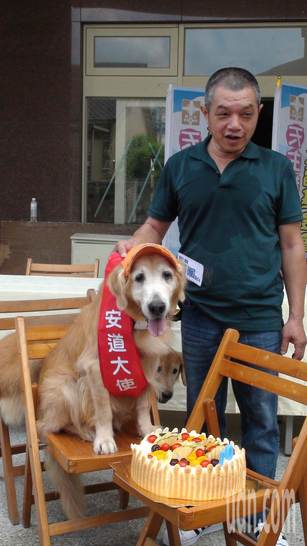 網紅黃金獵犬罔市曾是流浪狗,邱圍帶回家訓練成服務犬。記者謝恩得/攝影