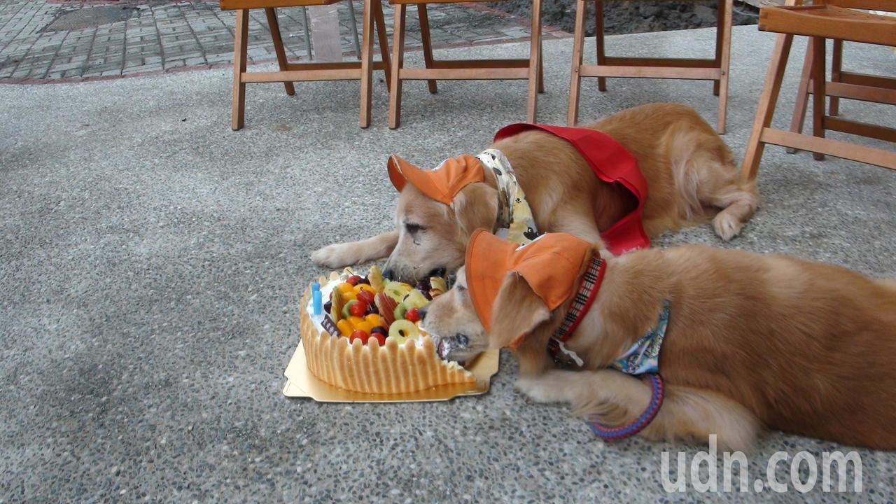 罔市(左)和蕗米大吃生日蛋糕。記者謝恩得/攝影