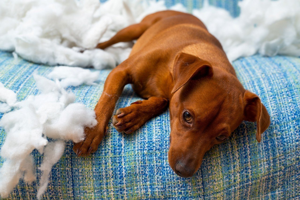 示意圖。虐待貓狗引發公憤,有民眾在公共政策網路參與平台提案動物保護法加重罰則並且...