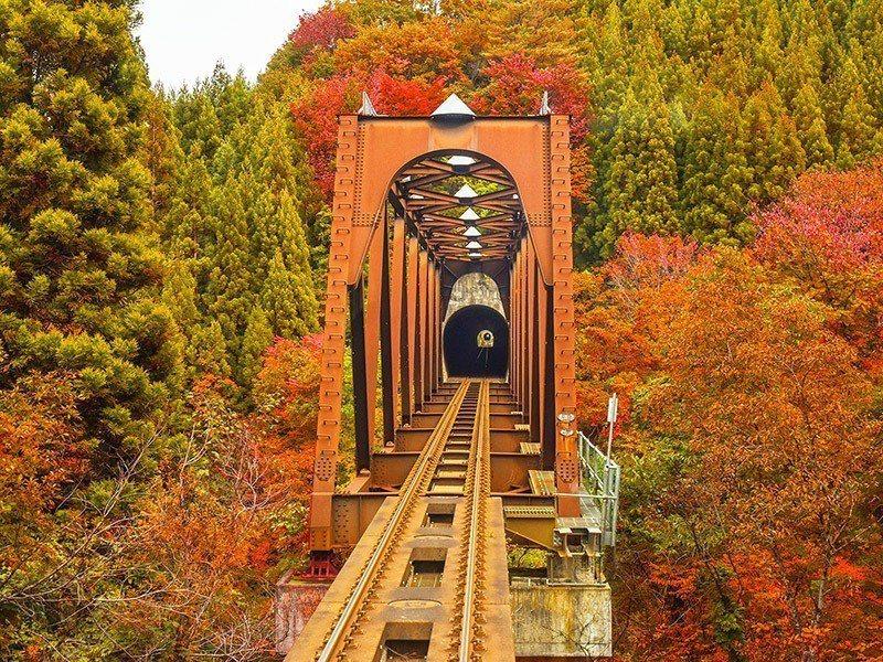 「秋田內陸縱貫鐵道」是日本東北著名的賞楓鐵道。圖/易遊網提供