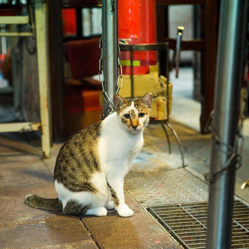 東門市場裡美食眾多,貓咪也肥美得很!  攝影|行遍天下