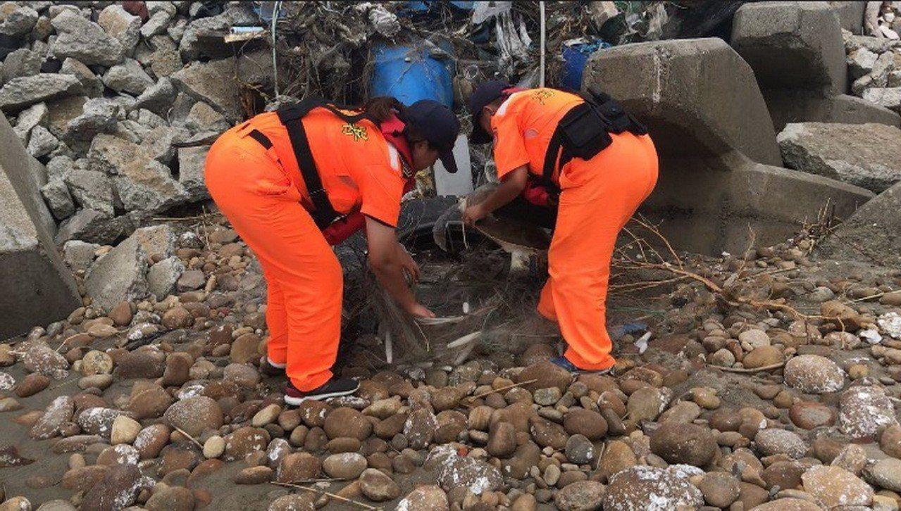 一隻疑似迷途上岸的綠蠵龜,昨天下午在苗栗縣白沙屯漁港的沙石灘被海巡人員發現救起。...