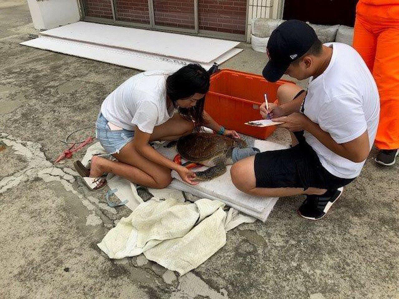 一隻疑似迷途上岸的綠蠵龜,昨天下午在苗栗縣白沙屯漁港的沙石灘被海巡人員發現救起,...