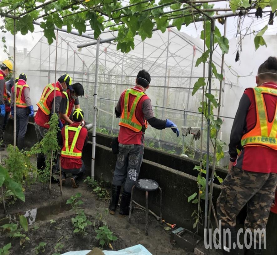 衛生單位最新在台中市大里區東昇里「開心農場」發現159個有孑孓的陽性容器。圖/疾...