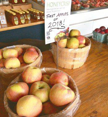 脆蜜蘋果(Honeycrisp)帶有強烈檸檬酸味,適合用來入菜、製作點心。 圖/...