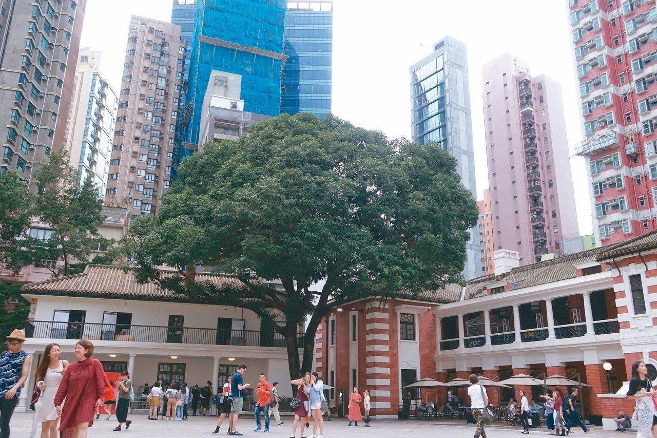 檢閱廣場上擁有傳說的「升官芒果樹」。 記者沈佩臻/攝影