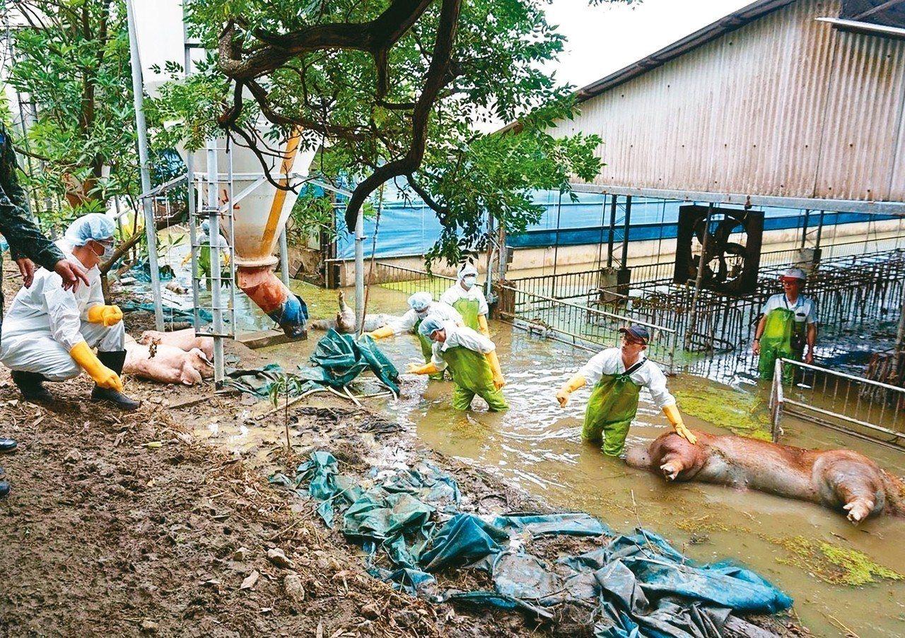 八二三水災造成禽畜大量死亡,國軍化學兵進駐嘉義消毒,避免傳染疾病趁隙而入。 圖/...