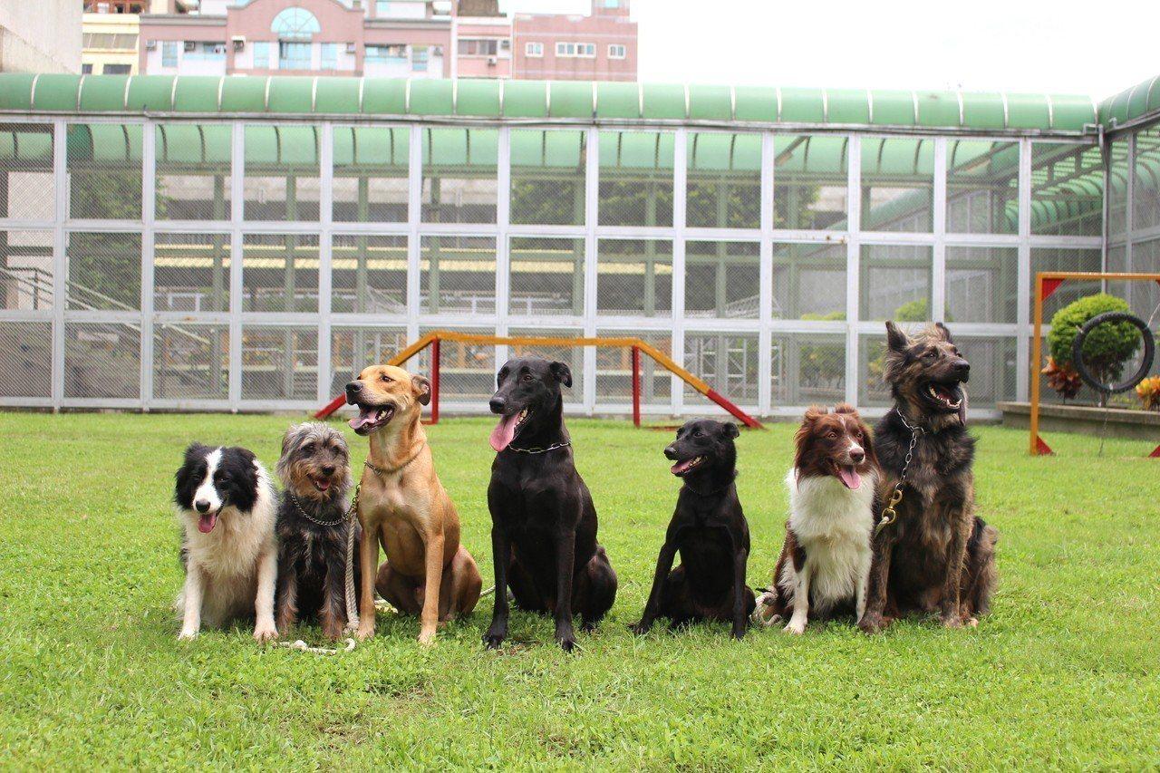 新竹監獄犬訓班的每隻狗狗,都來自新竹流浪動物收容所,12年來竹監已訓練了73隻狗...