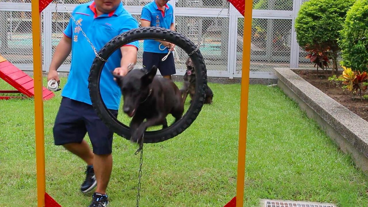 新竹監獄犬訓班除了幫助收容人通過寵物訓練師的考試,也成為收容人在監獄的心靈支柱。...