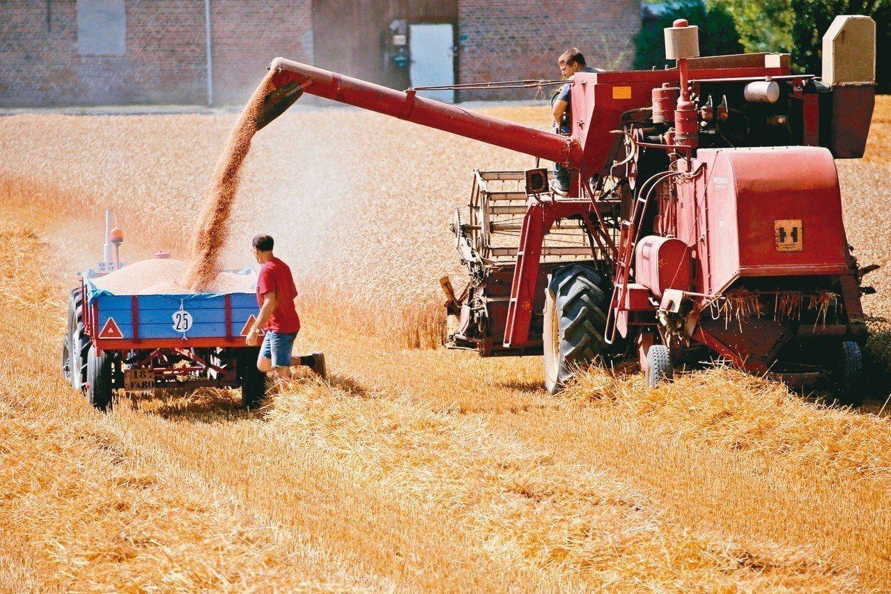 炎夏乾燥的天氣已終結小麥生產大國連五年豐收的趨勢。 路透
