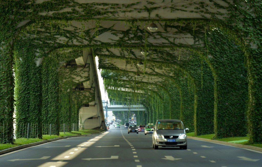 四川成都,汽車穿行在長滿綠色植物的橋墩間。中新社