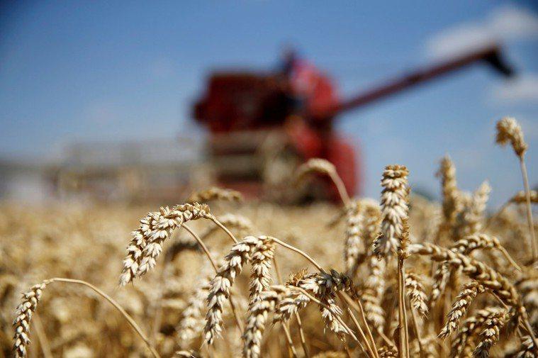 研究顯示,大氣裡過多的二氧化碳會降低小麥、稻米等農作物的營養價值。路透