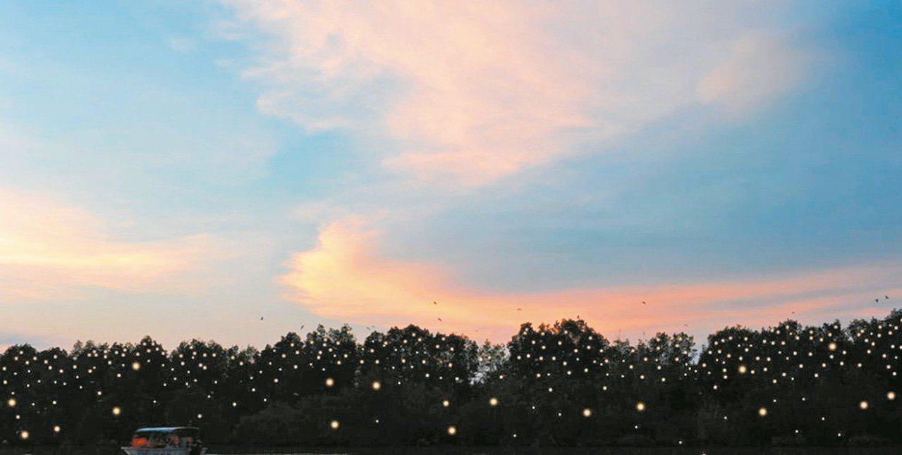 在甘榜關丹螢火蟲村,可欣賞到壯觀的螢火蟲美景。 圖/馬來西亞觀光局提供