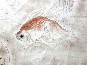 圖七:金魚。